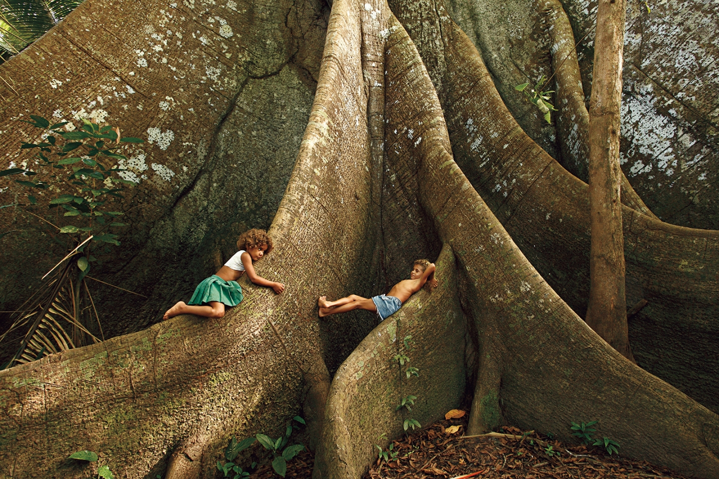 Children playing in an old kapok tree by the Jufari River, Amazonas. Araquém Alcântara